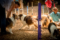 Sheltie Romp 2017 0070-Edit